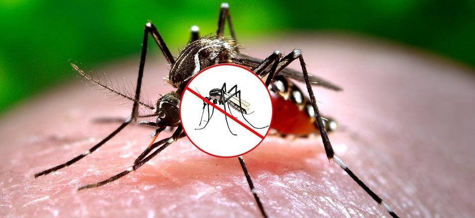 Jak bojovat proti komárům?!