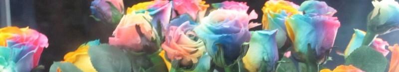 Pestrobarevné růže