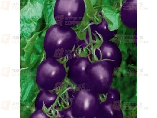 20 semínek - fialové rajče