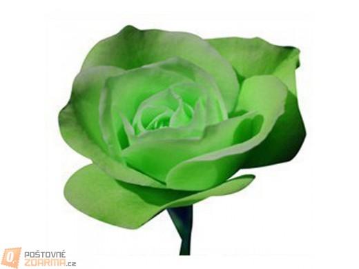 Zelená růže